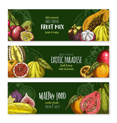 Banners of exotic fruits mix for menu vector