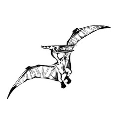 pterodactyl engraving vector image