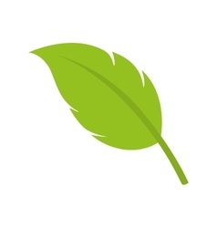 Leaf natural plant sheet vector