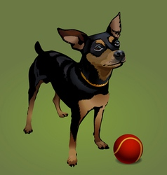 Small dog with red ball vector