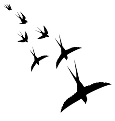 flight of the birds vector image
