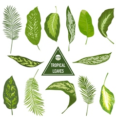 Set of Tropical Leaves - for design elements vector image