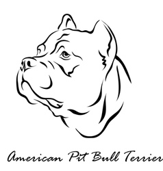 American Pit Bull Terrier vector image