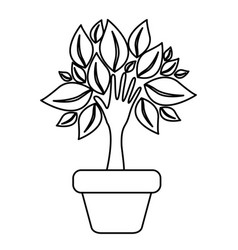 Figure tree with leaves inside flower pot vector