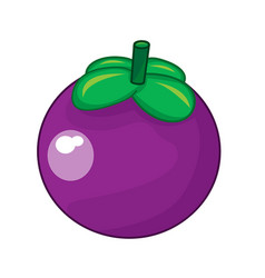 Mangosteen fruit isolated vector