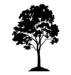 maple tree silhouette vector image vector image