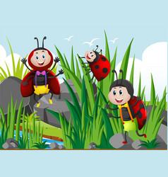 Three ladybugs in garden vector
