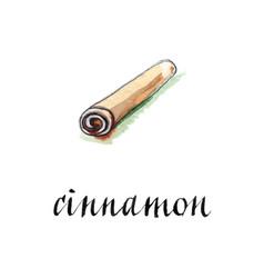 watercolor cinnamon stick vector image vector image