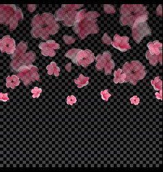 flying semi transparent petals and cherry blossoms vector image vector image