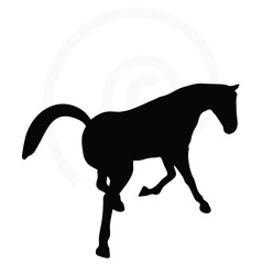 Horse silhouette in looking good pose vector