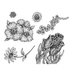Set of hand drawn ink flowers vector