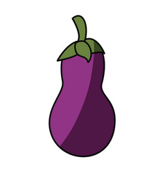 Eggplant delicious vegetable vector