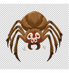 Wild spider on transparent background vector