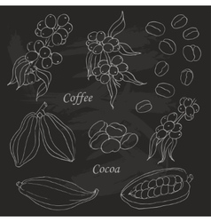 Set of coffee and cocoa elements doodle style on vector image