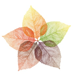 autumn leaves flower vector image vector image