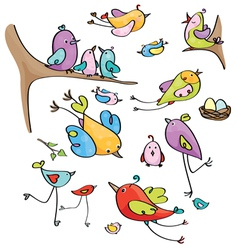 Birds colorful vector