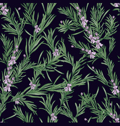 natural seamless pattern with green rosemary vector image