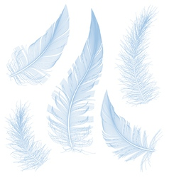 Blue feathers vector