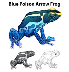 Doodle animal for blue poison arrow frog vector