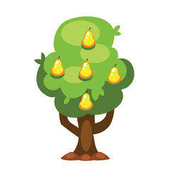 cartoon pear tree vector image vector image