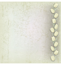 abstract grunge grey background with white tulips vector image vector image