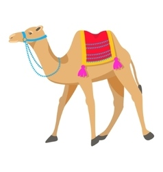 Camel cartoon on white vector image