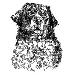 Berne cattle dog hand drawing vector
