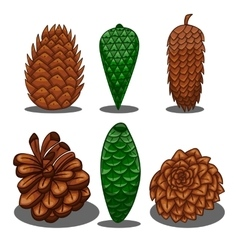 Set of fir cones vector