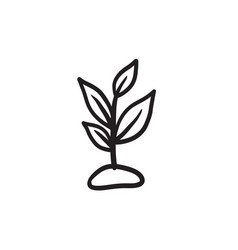 Sprout sketch icon vector