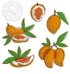 Hand drawn mango fruits vector
