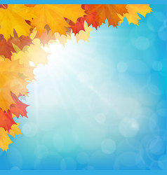 Realistic maple leaves corner sun sky vector