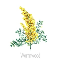 Watercolor wormwood herb vector