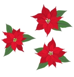 Red poinsettia flowers set on white vector