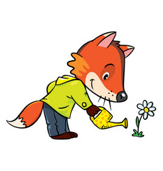 Little funny fox watering flower vector