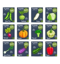 Organic farm vegetables price cards vector image