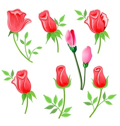 Roses twig with leaves set vector