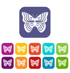 Stripped butterfly icons set vector