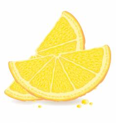 orange slices vector image