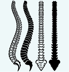 Spine from the front profile vector