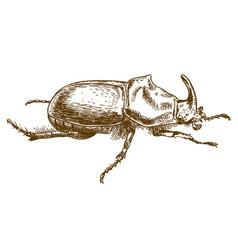 engraving drawing of rhinoceros beetle vector image