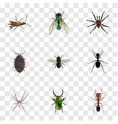 Realistic dor emmet ant and other vector