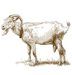 Engraving big goat vector