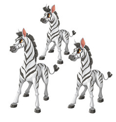 Cartoon zebra on white background animal vector