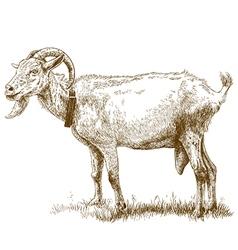 Engraving big goat vector