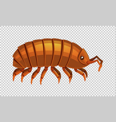Lice on transparent background vector