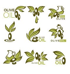Green olive and oil collection of logo vector
