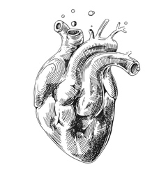 Sketch of human heart vector