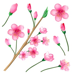 Flowered sakura set japanese cherry tree vector