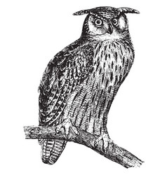 great horned owl vintage vector image