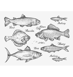 Hand drawn fish sketch trout carp tuna herring vector